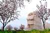 Martin Luther King, Jr. Memorial with cherry blossoms