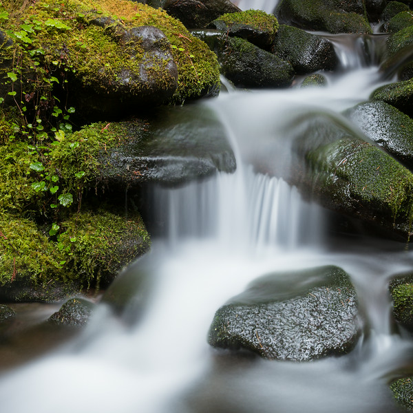 Cascades along the trail to Sol Duc Falls. Taken in Olympic National Park, Washington, USA.