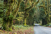 The road leading through the Hoh Rain Forest. Taken in the Hoh Rain Forest, Olympic National Park, Washington, USA.