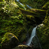 """Bunch Falls is located along the South Shore Road of Lake Quinault in Olympic National Park. The cascading waterfall works its way down the hillside of moss-covered rocks and boulders before it flows into the Quinault River.<br /> <br /> Photo by Kyle Spradley   © Kyle Spradley Photography    <a href=""""http://www.kspradleyphoto.com"""">http://www.kspradleyphoto.com</a>"""