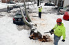 Workers cut up a tree that fell on an automobile at a residence on Pennbrook Avenue in Lansdale during ice storm.   Wednesday,  February 5, 2014.  Photo by Geoff Patton
