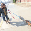"Record-Eagle/Keith King Lori Choiniere, of Traverse City, walks her dogs Wednesday as the sun shines in Traverse City. ""We didn't get out much this winter, they don't like to get their feet wet,"" Choiniere said."