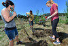 Laura Baumgardner, Ryan Powel and Amelia Howard of the Eagle Rock School plant aspens in the green space along Carriage Drive on Friday. The service project involved th planting of 70 trees in the space often visited by wildlife.