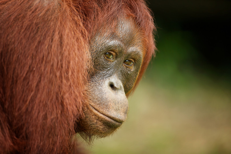 Eye Contact in Borneo