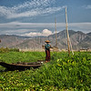 Tending the Garden on Inle Lak