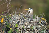 021013_Wakodahatchee_Wetlands-0178