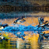 20131215-Ring-necked Ducks-0087-2