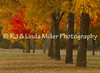 La Crosse County, Fall Color Trees