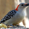 Cool, Woodpeckers Like Sunflower Seeds