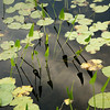 Lily Pads and Arrows