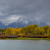 Mount Moran. Early evening Sept 26th, 2013. Swans on the Snake river in the foreground