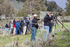 A crowd of photographers and other onlookers gather at the red fox (Vulpes vulpes) den at the Yellowstone Picnic Area, Yellowstone National Park, Wyoming, USA.