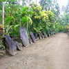 This photo, from a friend of one of my friends on Yap, was taken in 2006.  It shows a very traditional and beautiful stone money bank in the village of Kaday, on Yap Island