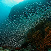 Fish wave - Similan islands, Thailand, 2011