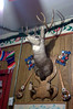 OK, this is both sick and amusing: a deer trophy mounted on the wall, complete with upturned hooves to hang your jacket on. Who things up this stuff?? We found this in a little Mexican restaurant on Beacon Hill.