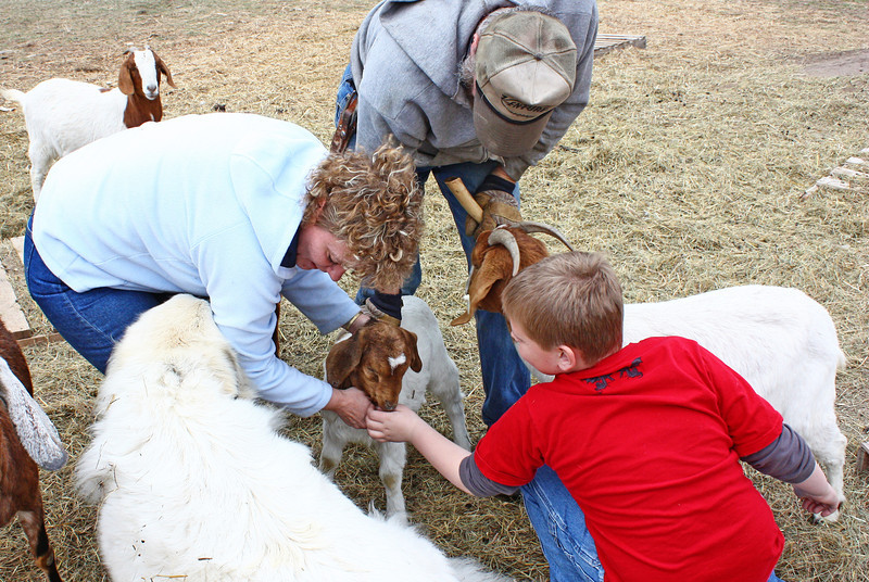 Meeting the goats.
