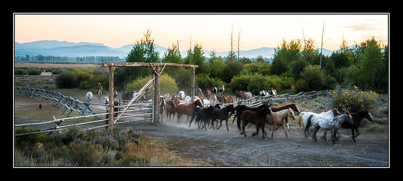 Early Morning Round-up at the Triangle X Ranch