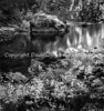 Black and white of the Mersed river in Yosemite.