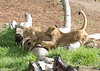 Lion cubs, all the time is playtime