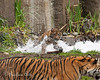 Jillian charges out of the bubbles to jump on Mom. - (Sumatran Tiger, Jillian's Birthday Party - 2/10/2014)