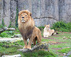 I think Jahari is trying out for the roll as Lion King in this photo.  That's Sukari in the background, as supporting actress.