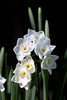 Time for Spring!  (Paperwhites)