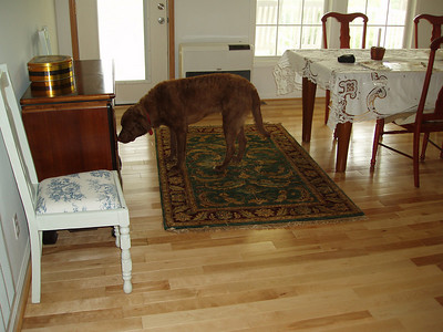 Hawkeye checking out the dining room at the mountain house