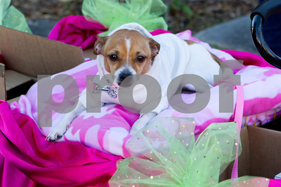 2013 Krewe De Paws of Olde Towne Parade featuring Amanda Shaw
