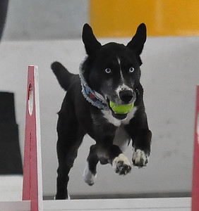 Flyball    May '14