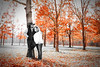 Selective color portrait of a newly wed couple under orange trees in Holly Springs, MS.