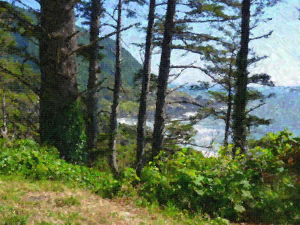 Oregon, Coast, Through, Trees
