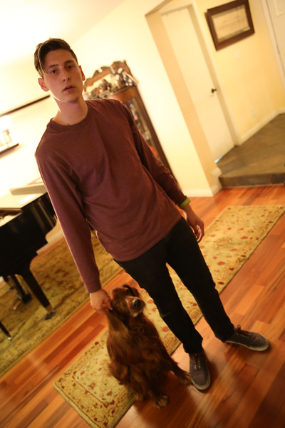 Daniel and the Dogs