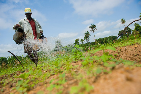 Biologisk kontroll i Afrika
