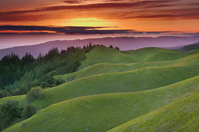 California - Marin Landscapes