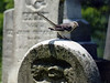 mockingbird tombstone 6