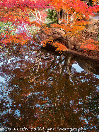 Ft Worth Japanese Garden Fall Color