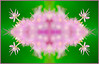 Blossom_Garlic_Decorative_Pink_Photomontage