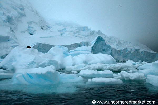 Antarctica Travel Highlights