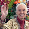 Dr. Jane Goodall, Grand Marshall of the 2013 Tournament of Roses Parade.