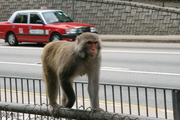 Hong Kong vs. Wildlife
