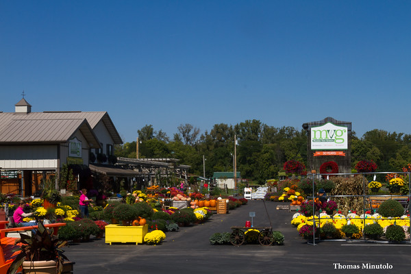 Autumn Colors At Meadowview Growers In New Carlisle Ohio  9-18-2014