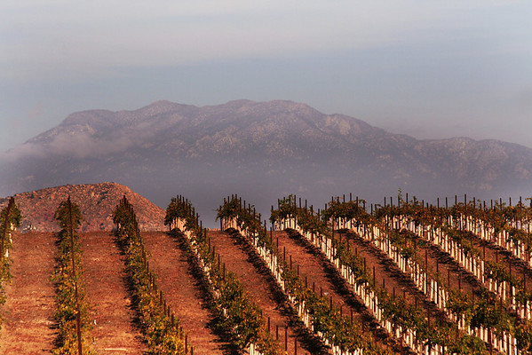 Wineries, Vineyards, Grape Stomps near San Diego