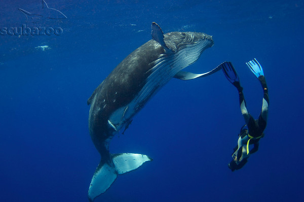 High five with whale by Scubazoo