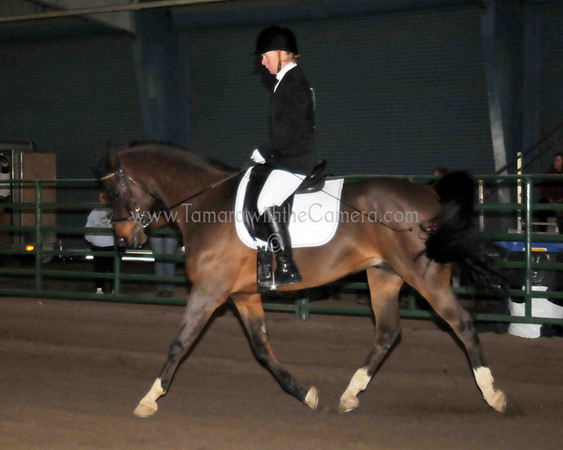 SPORT HORSE UNDER SADDLE & SHOW HACK