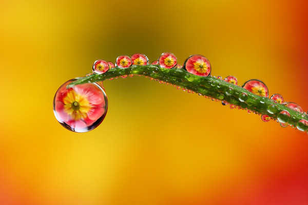 Flower refraction macro photo by LordV Macros