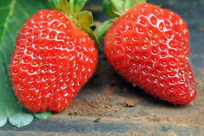 Rutherford's Strawberries