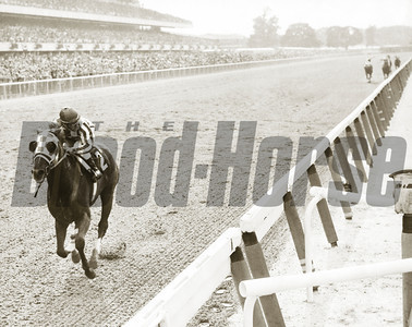 Thoroughbred Greats