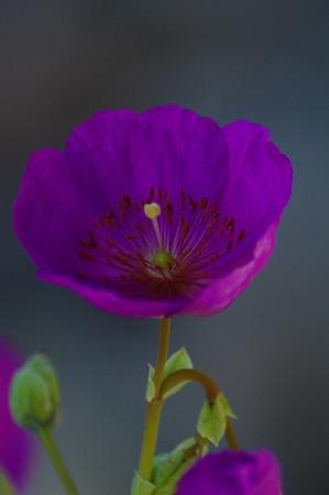 June 2011 Flower Macros