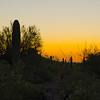 Moonscape at the Desert Botanical Gardens.  Fantastic photography class starting just as the sun was setting.  It was a lovely night for photography in the desert.