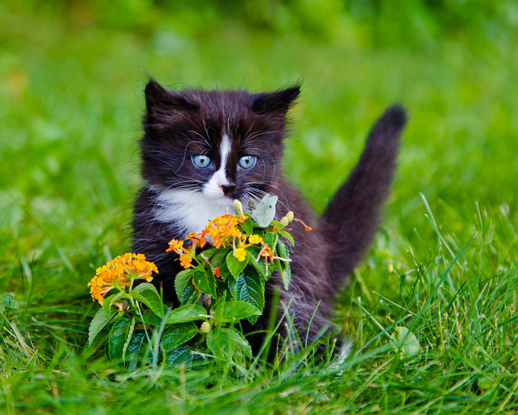 A kitten is watch the butterfly